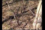metsastamine