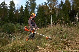 Metsakultuuri hooldus. Foto: Kaupo Kikkas, RMK.