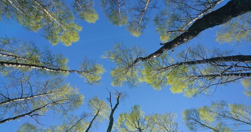 mets, metsa majandamine, metsakaitse