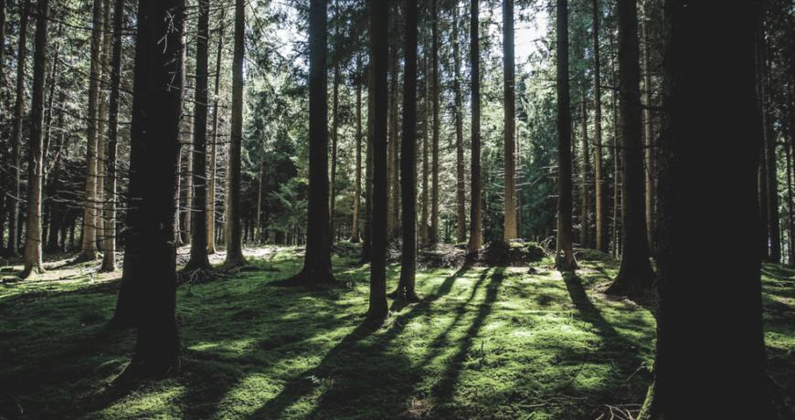 Eramets, mets, metsakasvatus