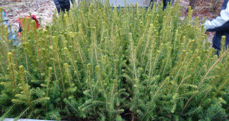 uuendamine, taimed
