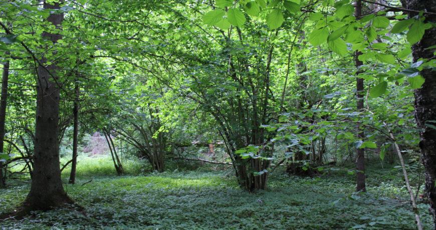 vääriselupaik, looduskaitse