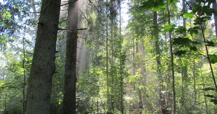 eramets, mets, ökosüsteem