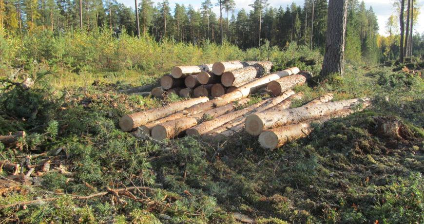 metsa müük, puidu müük, metsakasvatus