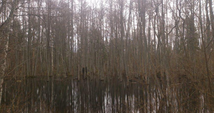 Eramets, metsaraie, üleujutus, liigniiskus, märg maa