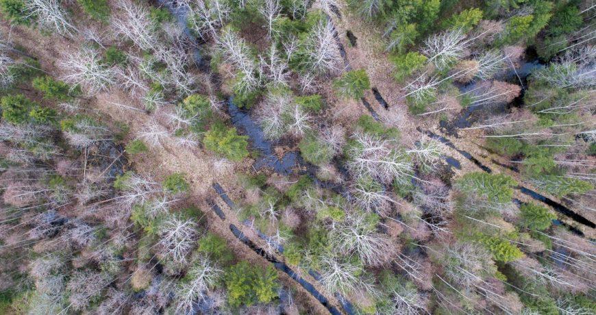Eramets-maaparandus-liigniiskus-märg-pehme-metsa-majandamine