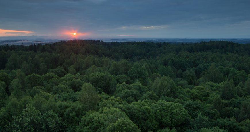 Eramets, mets, looduskaitse, elurikkus