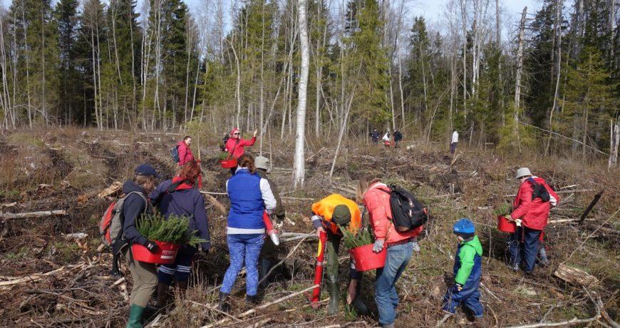 Eramets-metsauhistu-metsa-istutamine-uuendamine