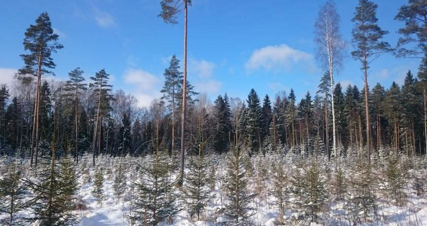mets metsamaa metsaomanik