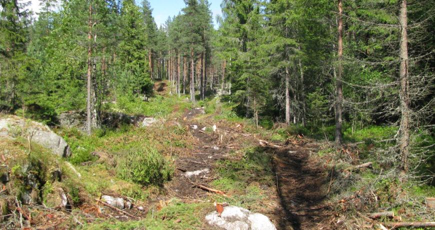Eramets_Rootsi-maapind-metsa-majandamine