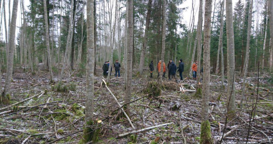 loodusturism, metsamajandus