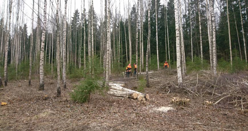 Luua metsanduskool, õpilased, metsandusharidus