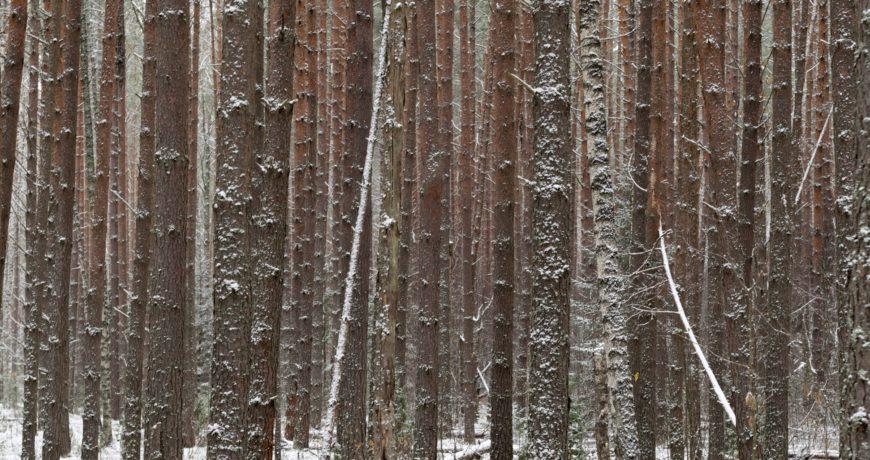 metsa majandamine