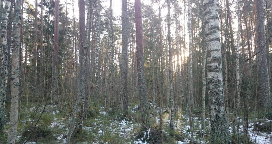 metsa majandamine, süsinik, kliima