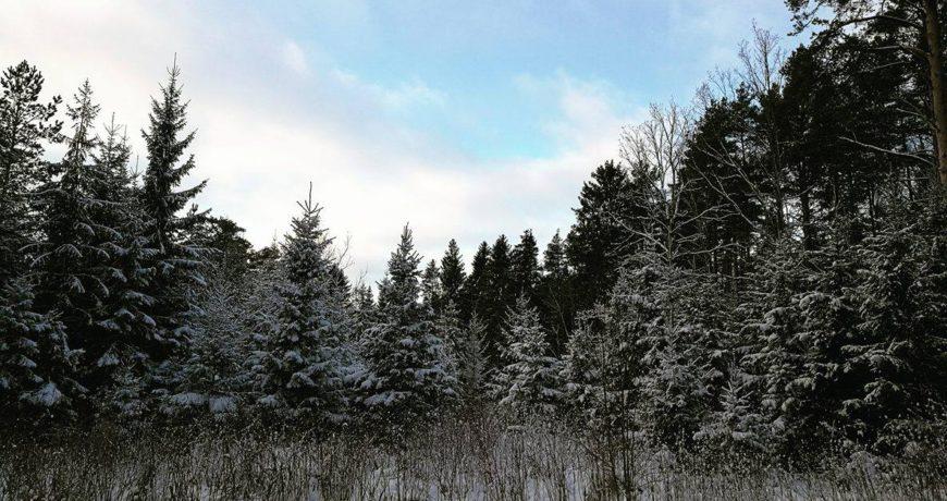 eramets, metsa majandamine