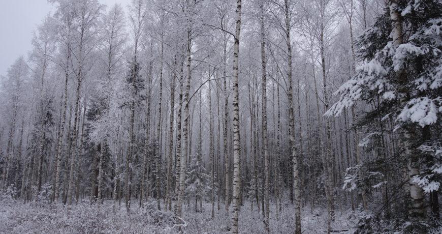 mets, talv, lumine mets