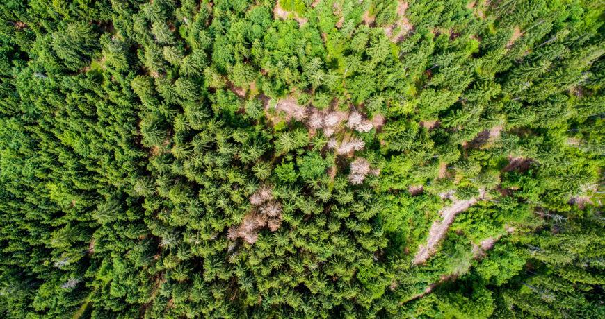 harvendusraie, metsaselts