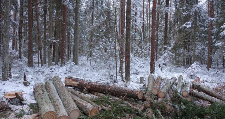 mets, harvendus, metsaühistu