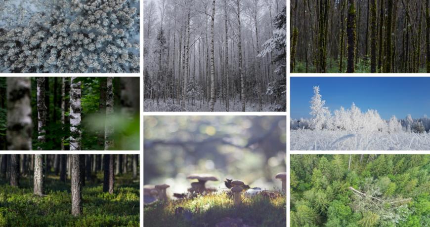 natura infopäevad