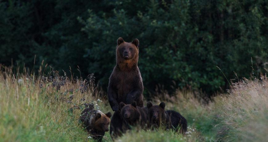 aasta-loodusfoto-mikk-matsi-karupere