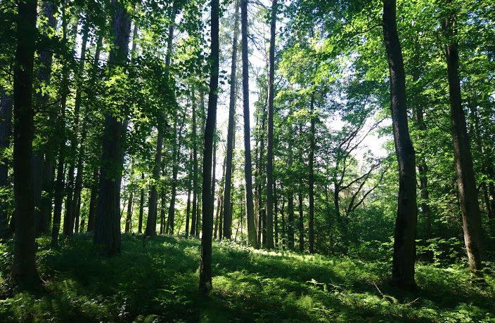 looduskaitse, loodushoid, vana mets
