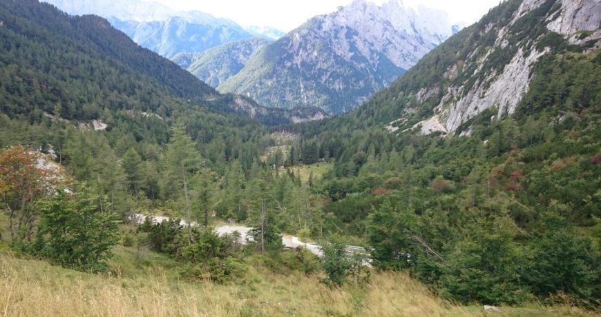 Sloveenia, metsandus, väliskoostöö