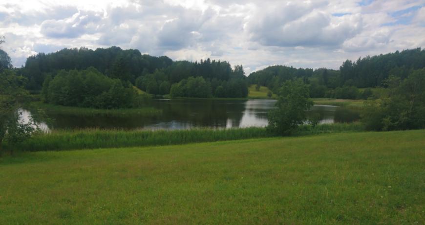 mets, järv, rohumaa, maastik