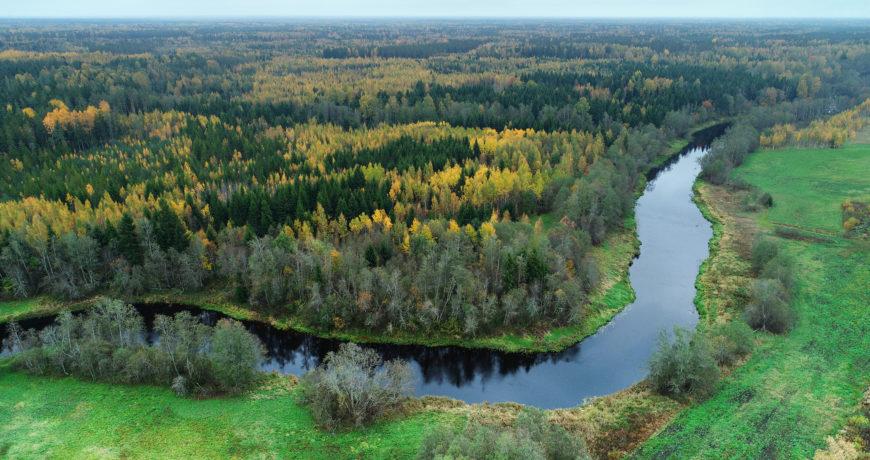 mets, jõgi, vesi