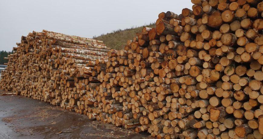 eksport, paberipuu, peenpalk