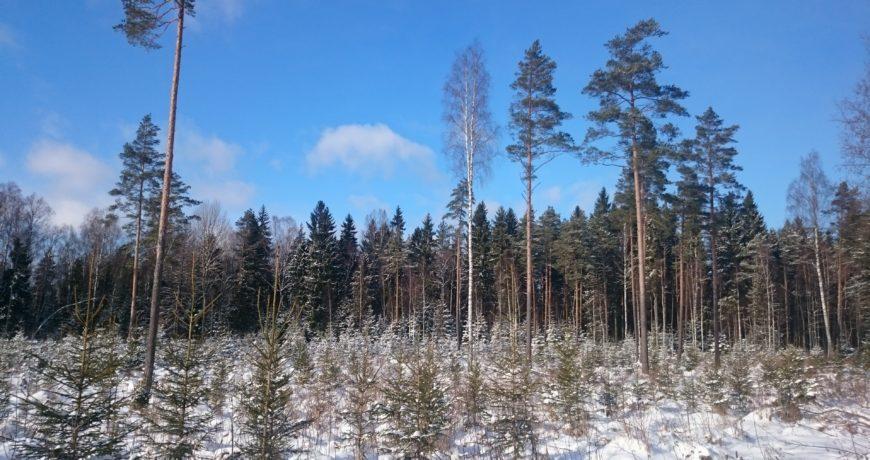uuendusraie, istutamine, kultuur, mets, eramets