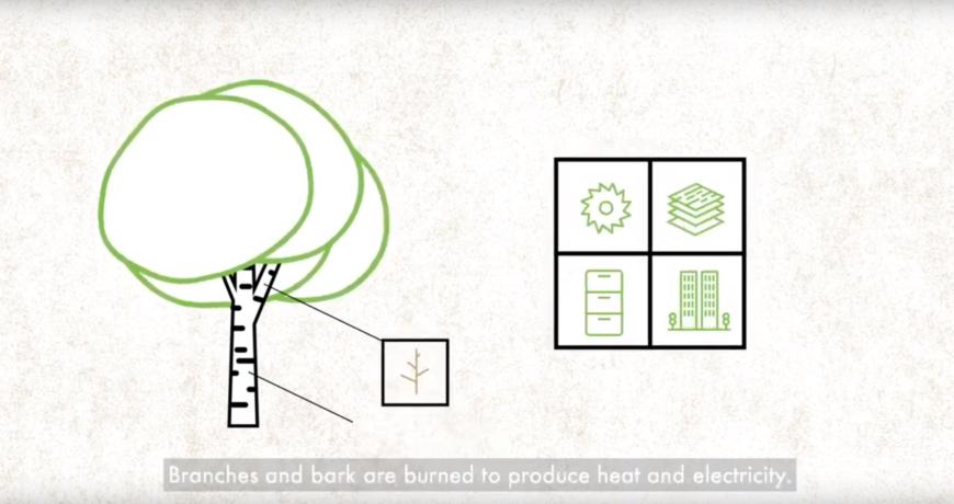 puidutööstus, biomajandus