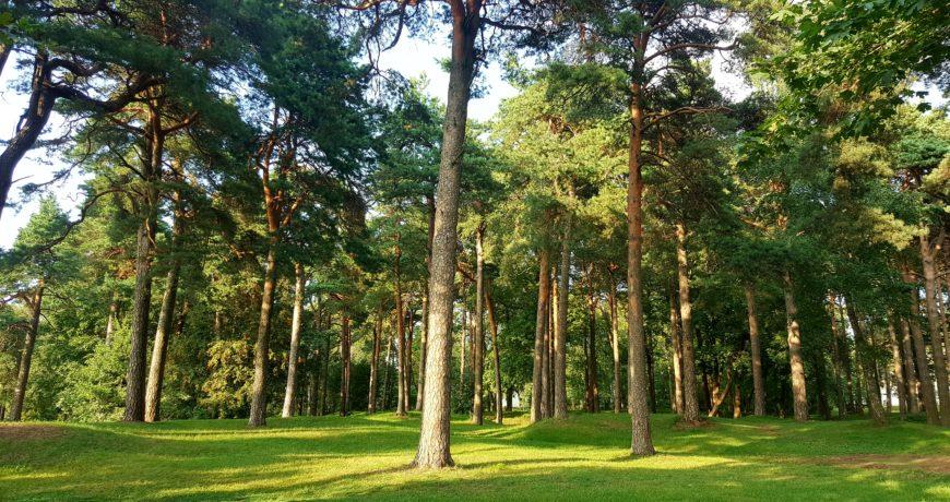 männik, mets, männimets, park