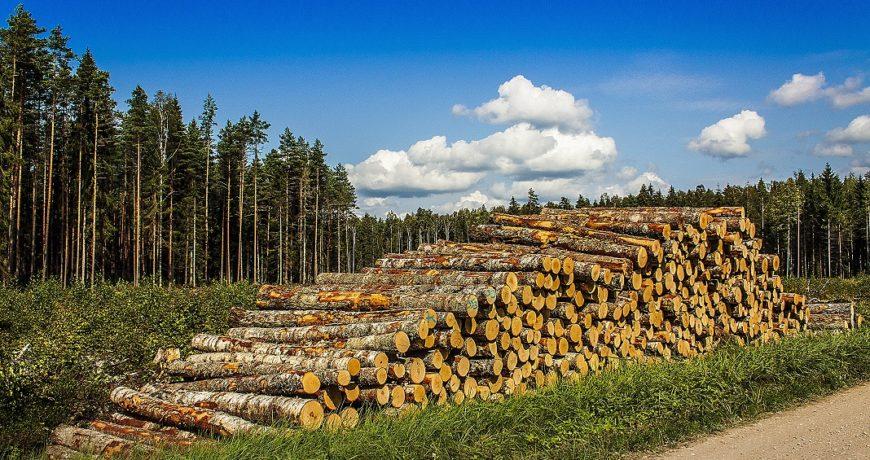 uuendusraie, lageraie, palgid, mets